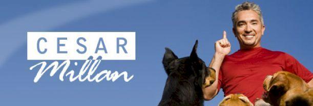 Cesar Millan - L'homme qui parle aux chiens